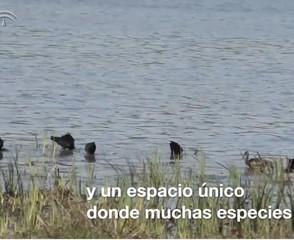 Imagen de video 45