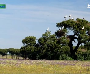 Imagen de video 29