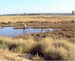 Imagen de video 9